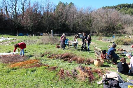 Atelier vannerie sauvage flayosc var le jardin qui redonne for Atelier du jardin d acclimatation