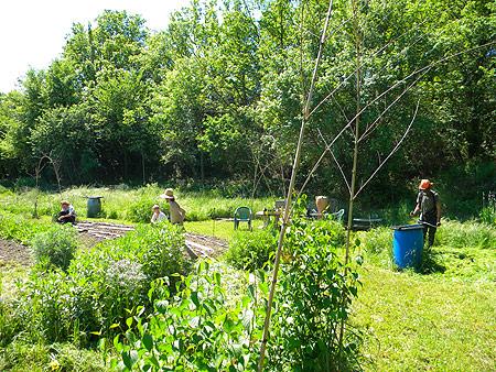 Travaux collectifs au jardin qui redonne for Entretien concombre jardin