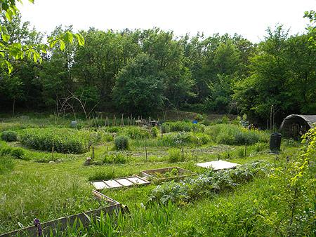 Travaux Collectifs Au Jardin Qui Redonne